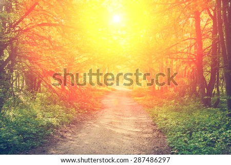 Dirt road in spring green forest