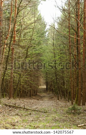 dirt road in the forest