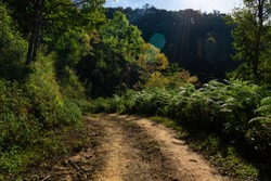 Dirt road in the jungle.