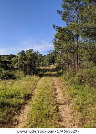 Dirt road in the scrubland in south of France in Provence. Nice sky at the end of the day and beautiful light Stok fotoğraf ©