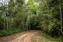 Dirt road in the woods suitable for extreme sports in Asia.