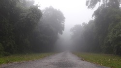 dirt road into the jungle mist