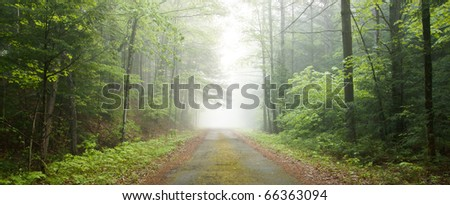 Dirt road leading through a foggy forest