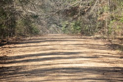 Dirt road leading up a hill with trees lining both sides