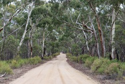 dirt road through australian bushland