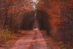 Dirt road through autumn colorful foliage. Autumn tunnel through wooded countryside. Amazing autumn tunnel path trough a colorful forest
