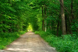 Dirt road through green forest, tunnel with trees and sunlight
