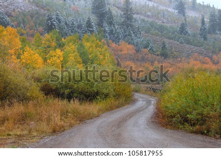 Dirt road winding through autumn scenery in the Cache National Forest of Utah