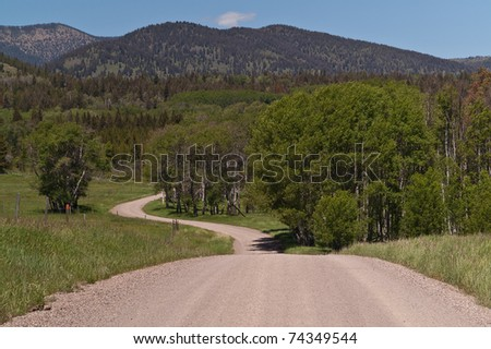Dirt road winding through the trees headed toward the mountains.  Use the wide part of the road for your message.
