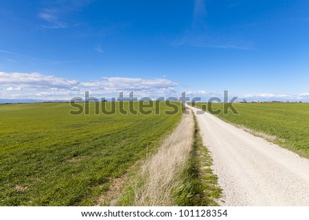 Dirt road with green fields planted with corn