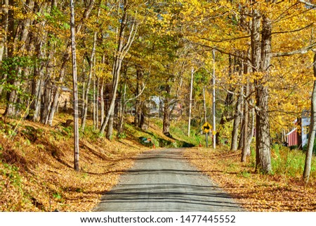 Dirt unpaved gravel road at autumn day in Vermont, USA. #1477445552
