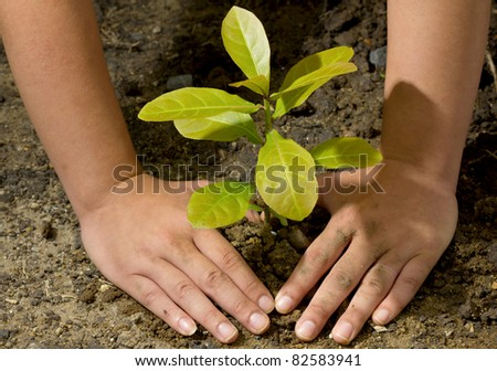 Dirty and muddy of male hands and tree ground plant