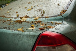 Dirty back of the car with fallen yellow leaves. Сar parked under tree near metallic fence in autumn. Fall yellowed leaves on hood. Atmospheric urban landscape