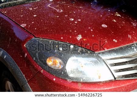 dirty car dirty birds left their marks