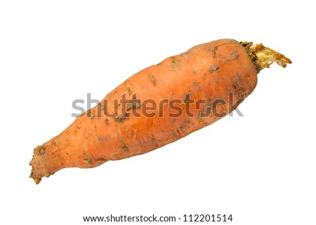 dirty carrots on a white background