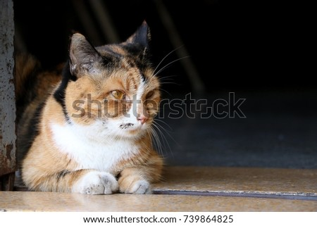 Dirty cat looks bad mood, lying in front of house, Look left, look right. #739864825