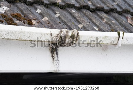 Dirty clogged white plastic pvc gutters and drain pipes with mossy green mould on plastic fascias.  Blocked drains and guttering need window cleaners and regular yard work maintenance for drainage Photo stock ©