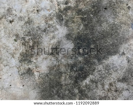 Dirty Fungus Or Mold On Concrete Floor Texture Background Ez Canvas