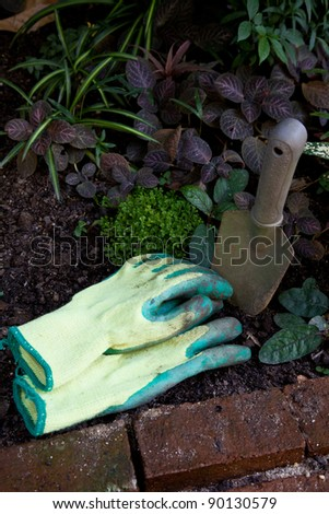 Dirty Glove in the small garden