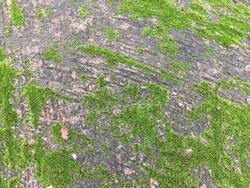 Dirty green cement floor natural texture
