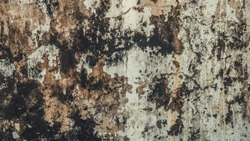 Dirty moldy grungey wall textured background
