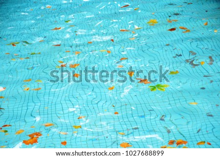 dirty pool water surface autumn leaves floating on the water concept