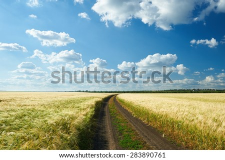 dirty road on wheat field and blue sky landscape #283890761