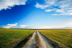 Dirty rural sandy road in green wheat field. Spring season. Meadow and pathway, sunset, sunrise time.