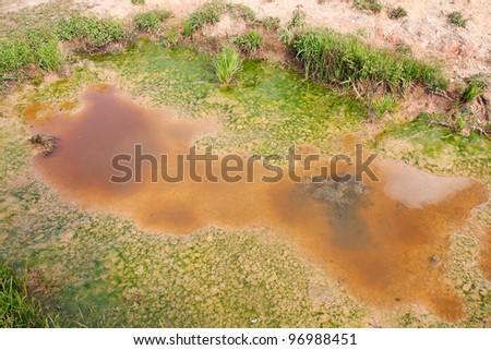 dirty wasteland, close-up of swamp