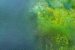 Dirty water in the river. Pollution of the river water. Ecological problems. Algae bloom. Top view.