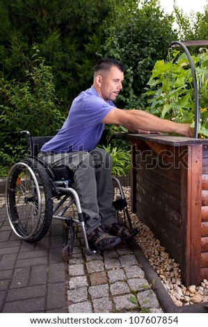 disabled young man in wheelchair in gardening, works outside