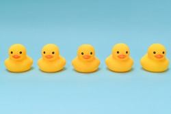 Discipline concept, rubber ducky are lining up facing same direction