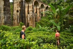 Discovering the tea fields around the ancient nine arches bridge in Ella.