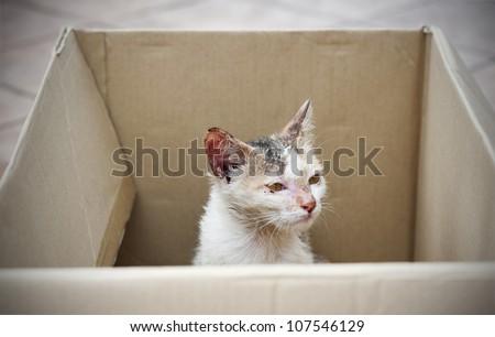 diseased stray cat being rescued