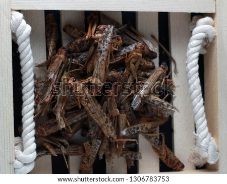 dish of locust : it's normal to eat locust in Saudi Arabia