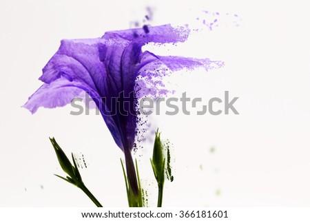 Dispersion Purple Flower