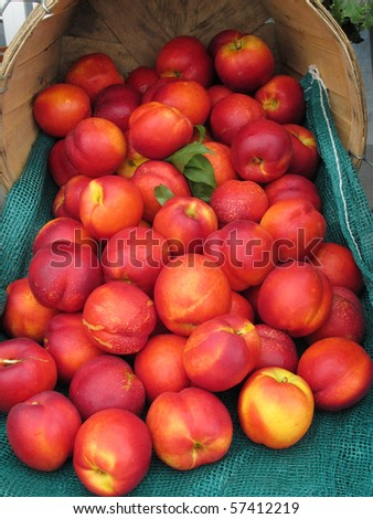 display of fresh nectarines