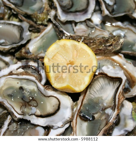 display of fresh oysters ready to eat