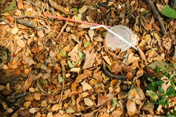 Disposable plastic straw and lid left in forest long time ago. Thrown on the ground among twigs, moss, grass, fallen needles and green plants. Plastic waste pollution problem.