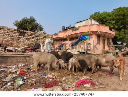 disposal dump in the middle of the asian street with stray animals eating