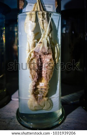 Dissected animal in preserved liquid. Text says name of animal in Russian. #1031939206