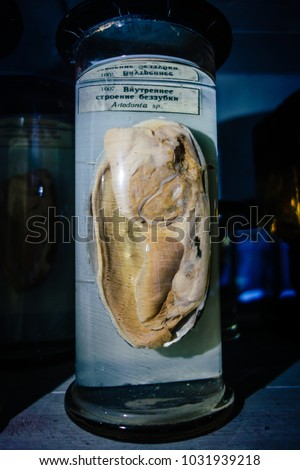 Dissected animal in preserved liquid. Text says name of animal in Russian. #1031939218