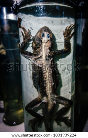 Dissected animal in preserved liquid. Text says name of animal in Russian. #1031939224
