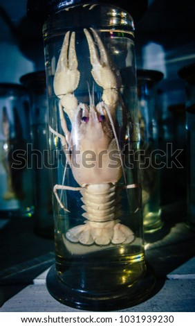 Dissected animal in preserved liquid. Text says name of animal in Russian. #1031939230