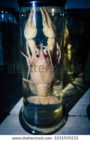 Dissected animal in preserved liquid. Text says name of animal in Russian. #1031939233