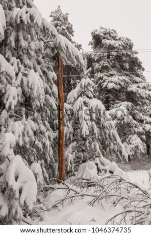 Distinguishing electrical pole that sustains on the snow and frost of the winter mountain.