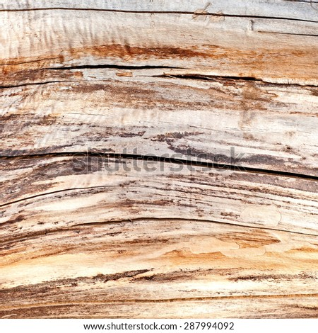 Distress Dry Wood texture for your design.