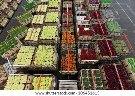 Distribution at a Dutch flower and plant market