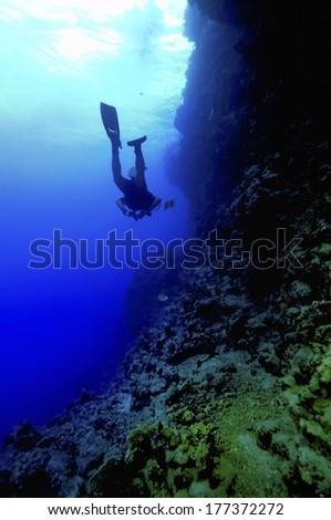 Diver 1 #177372272