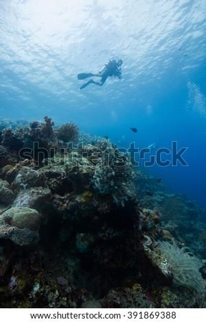 Diver #391869388